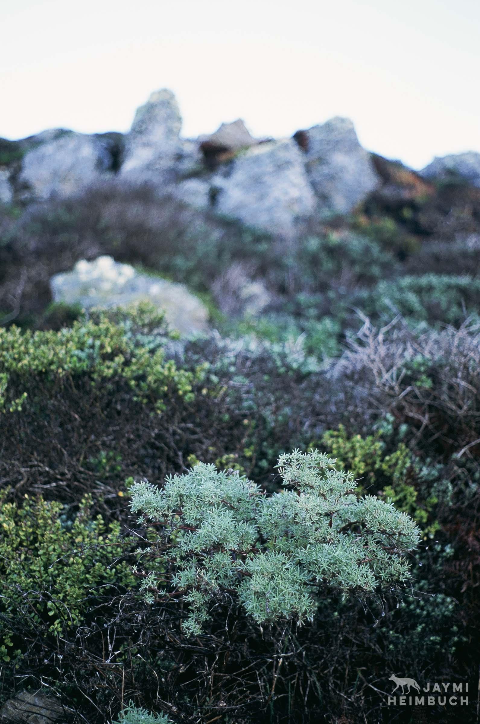 35 mmm lichen and moss