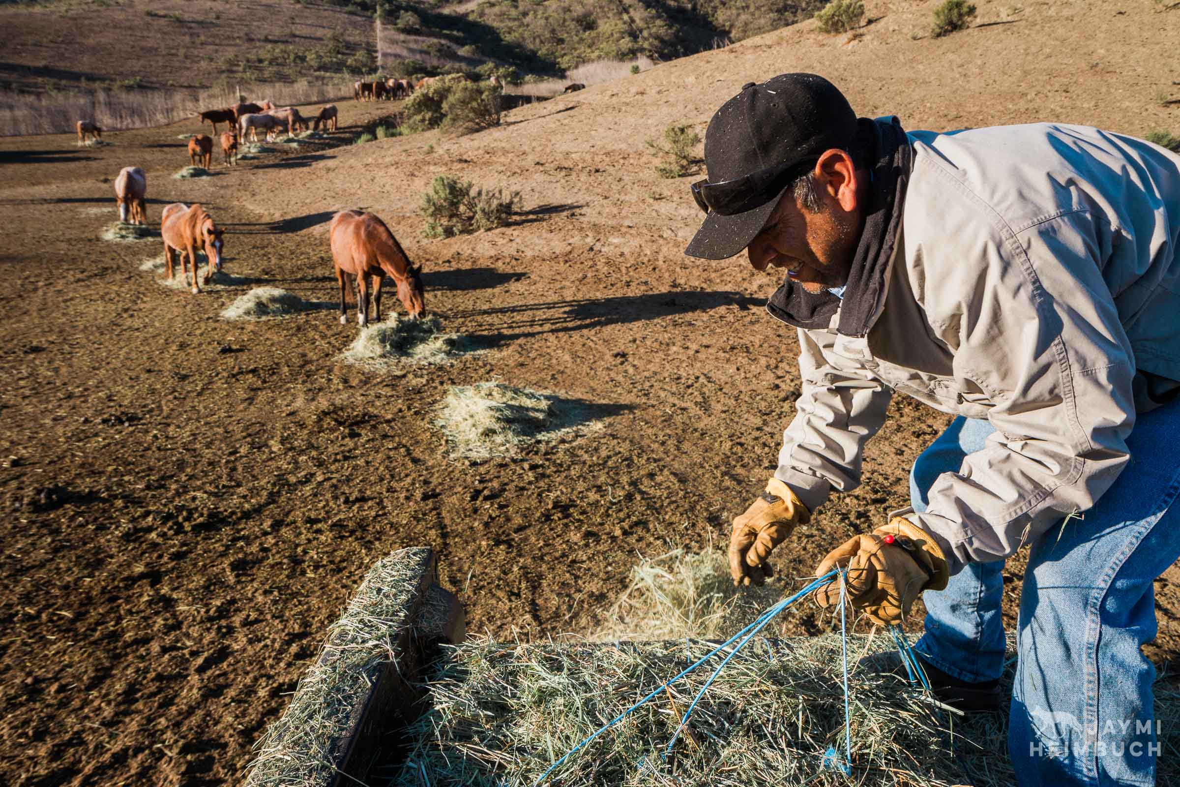 horse ranch worker