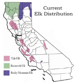 tule elk current distribution map